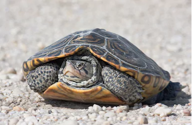 What You Probably Don't Know About Turtles in New Jersey